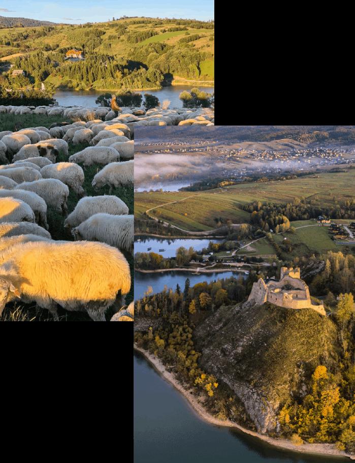 owca-zamek